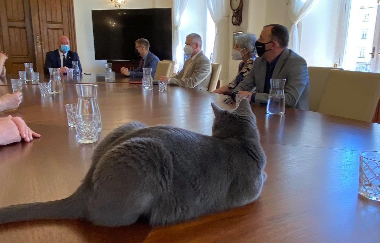 Społeczna Rada ds. Zwierząt, kot wrocek