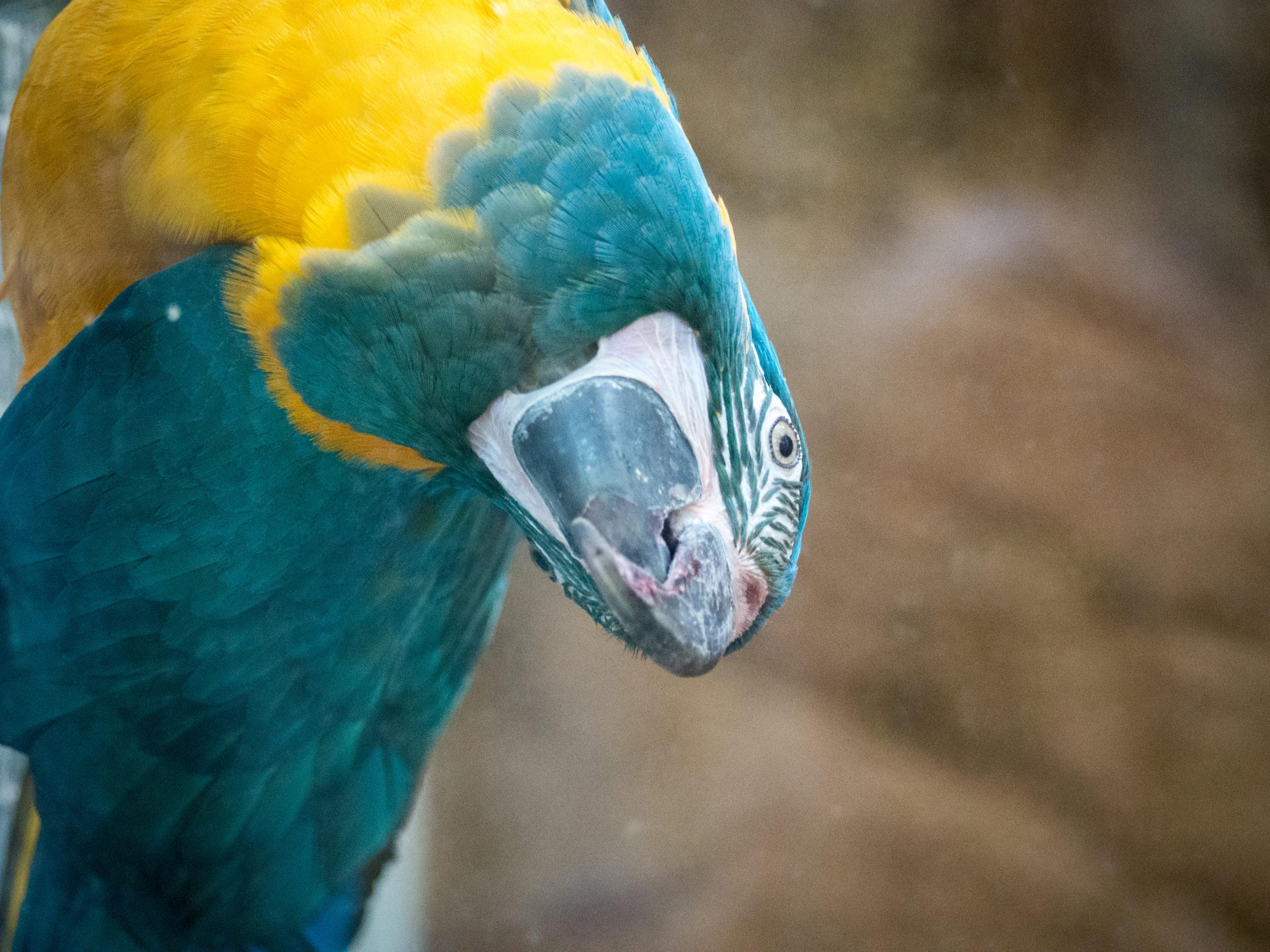 ptaszarnia zoo wrocław
